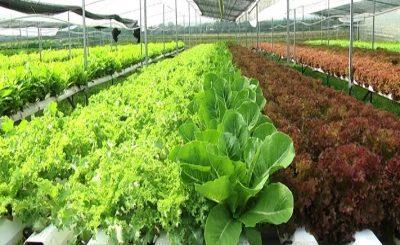 Nông nghiệp hữu cơ hội nhập thị trường Việt Nam trong thời gian tới